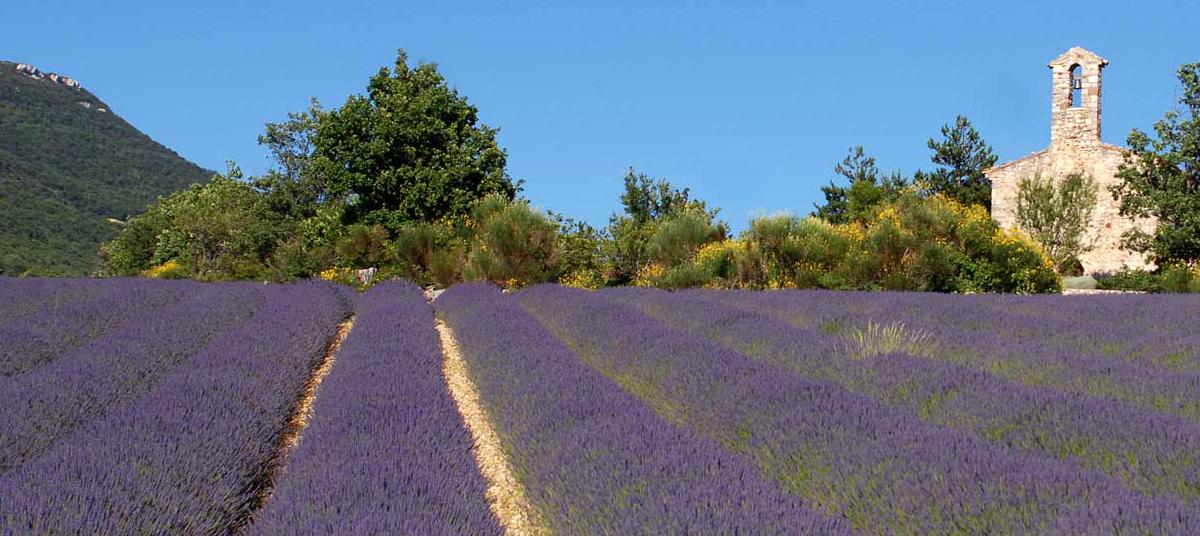 Lavande & Soleil - Lavender & Sun